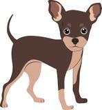Собака чихуахуа Стоковые Фото