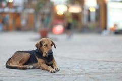 Собака шавки снаружи Стоковое Изображение