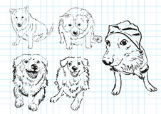 собака шаржа Стоковые Фото