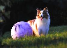 собака шарика Стоковые Фотографии RF