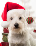 Собака щенка белого рождества Стоковая Фотография RF