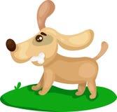 Собака щенка играя с косточкой Стоковое фото RF