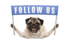 Собака щенка мопса задерживая голубое знамя с текстом следовать нами для социальных средств массовой информации Стоковые Фотографии RF