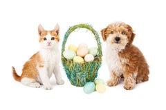 Собака щенка пасхи и котенок Стоковая Фотография