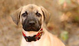 Собака щенка принимает стоковые изображения