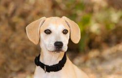 Собака щенка принимает стоковое изображение rf