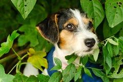 Собака щенка принимает стоковые фотографии rf