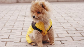 Собака щенка Стоковые Фото