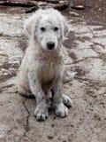 Собака щенка Стоковые Изображения RF
