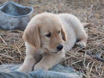 Собака щенка Стоковое Изображение