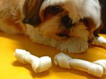 Собака щенка Стоковое Изображение RF