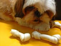 Собака щенка Стоковая Фотография