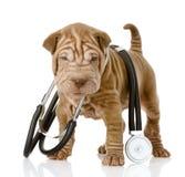 Собака щенка Shrpei с стетоскопом на его шеи Стоковые Изображения RF