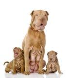 Собака 2 щенят sharpei и и их взрослая мать Стоковая Фотография RF