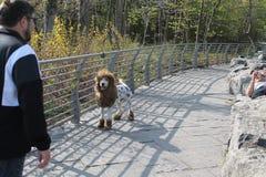 Собака льва Стоковые Фото