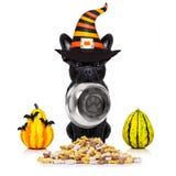 Собака дьявола хеллоуина голодная для еды Стоковое Фото