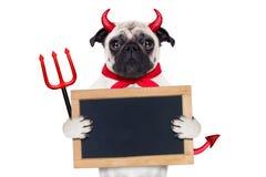 Собака дьявола хеллоуина Стоковое фото RF