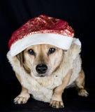 Собака эльфа стоковые фото