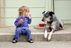 собака яблока Стоковая Фотография RF