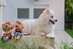 Собака/японский портрет крупного плана собаки шпица Стоковая Фотография