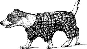 Собака для прогулки Стоковое фото RF
