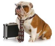 собака дела Стоковая Фотография