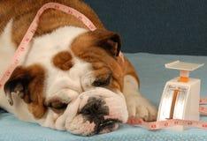 собака диетпитания Стоковая Фотография