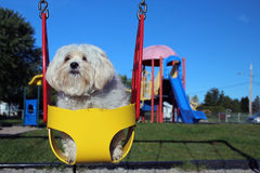 собака дней Стоковые Фото