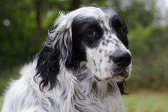 собака 11 Стоковые Фото