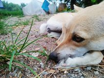 Собака стоковые изображения rf