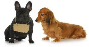 Собака 2 с сообщением Стоковые Фотографии RF
