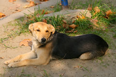 собака 2 Стоковое фото RF