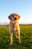 Собака Стоковое фото RF