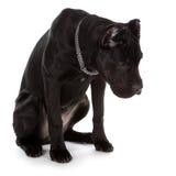 Собака Стоковые Изображения