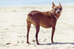 1 собака Стоковая Фотография RF