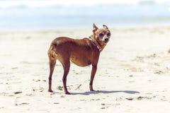 собака 2 Стоковые Изображения