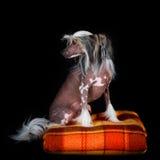 Собака Стоковое Фото