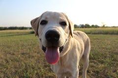 Собака Стоковые Фотографии RF