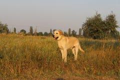 Собака Стоковая Фотография