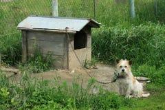 собака стоковая фотография rf
