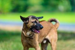 Собака Стоковое Изображение RF