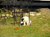 Собака Стоковое Изображение