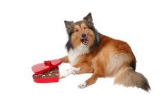 собака 9 романтичная Стоковая Фотография RF