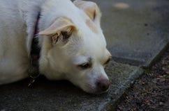 1 собака Стоковые Фотографии RF