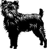 собака affenpinscher иллюстрация вектора