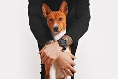 Собака Basenji обнятая предпринимателем Стоковые Фото