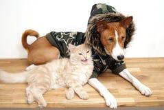 собака basenji Стоковое Фото