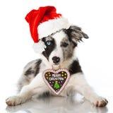 Собака Christams Стоковая Фотография RF