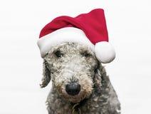 Собака Christams Стоковое Изображение RF