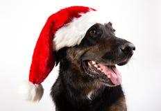 Собака Christams стоковая фотография